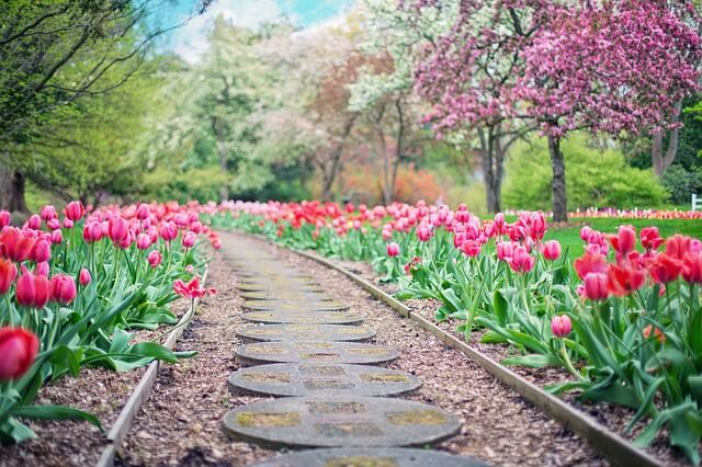 Zdjęcie do tekstu - Kalendarz ogrodnika