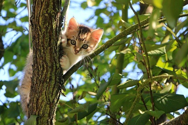 zdjęcie do artykułu wycinka drzew