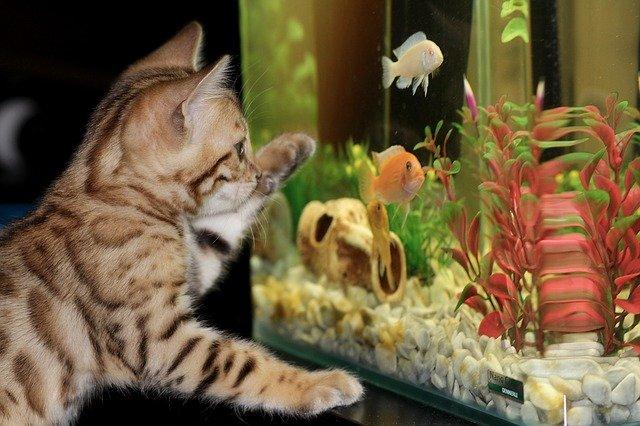 zdjęcie do artykułu zakładanie akwarium