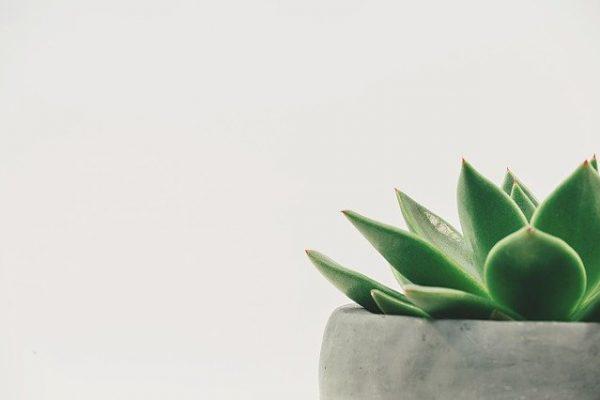 Zdjęcie do tekstu - Biophilic design - powrót do natury